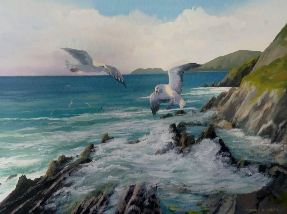Cathal O Malley - dingle gulls