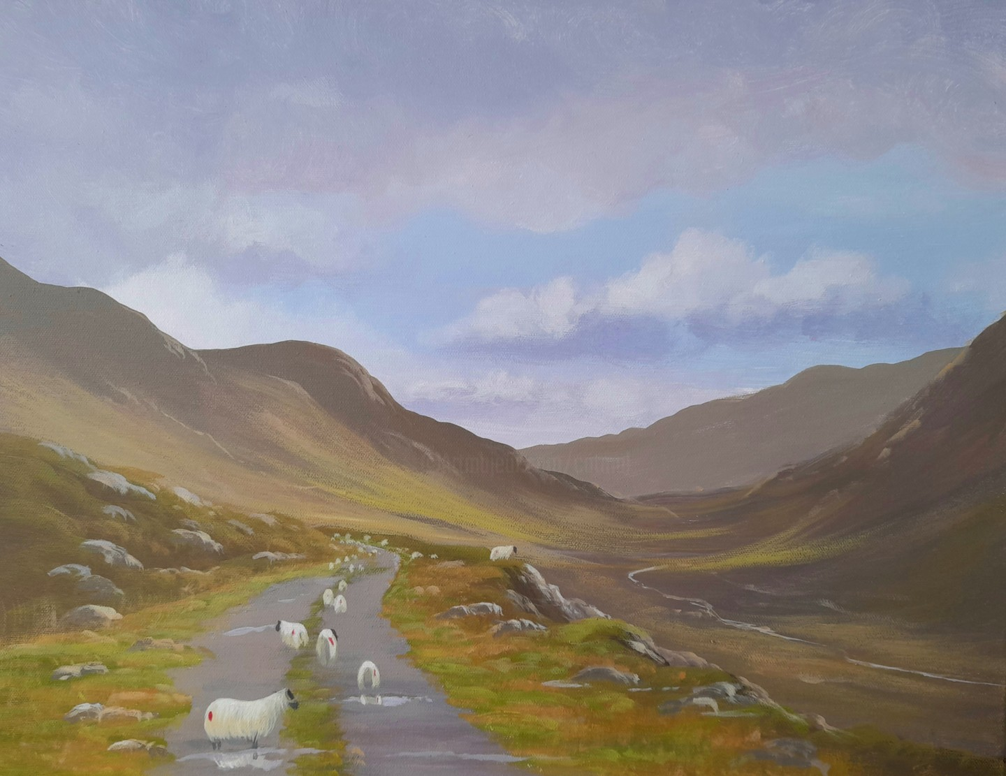 Cathal O Malley - Maam valley sheep august