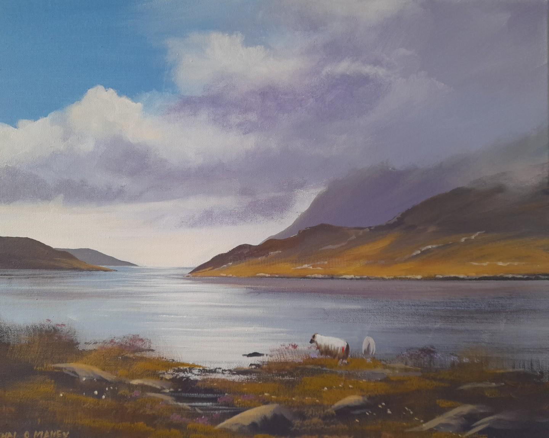 Cathal O Malley - Leenane  sheep