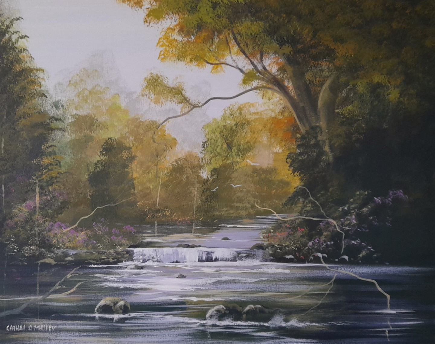 Cathal O Malley - Ballynahinch  forest light