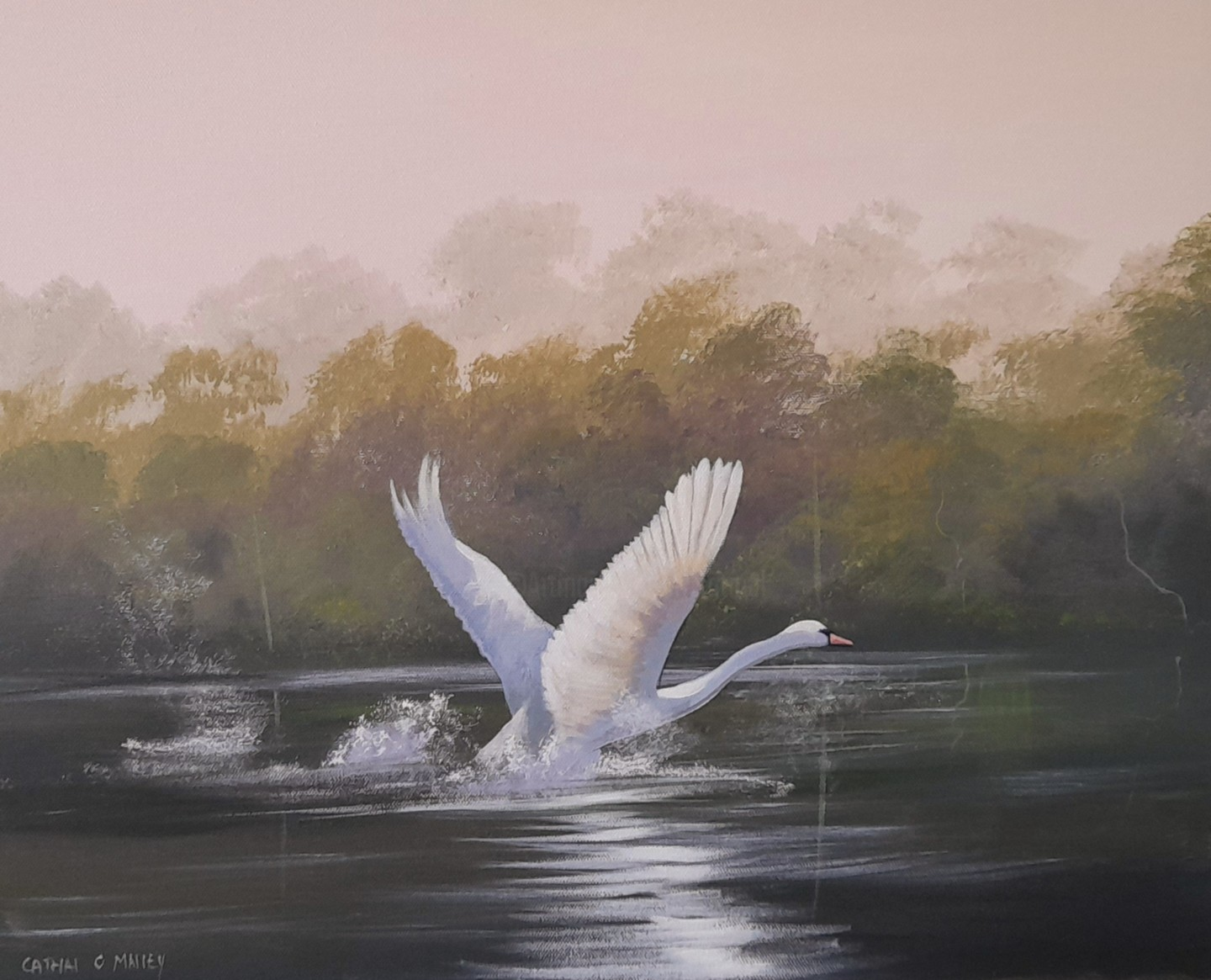 Cathal O Malley - Swan rising
