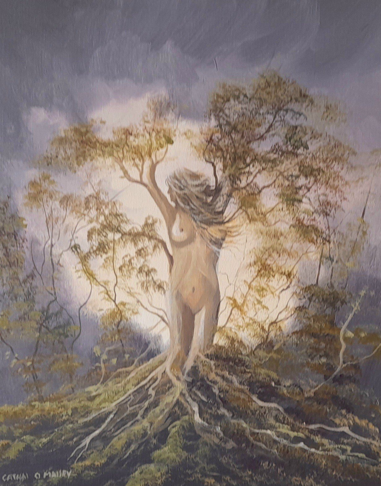 Cathal O Malley - Tree of life