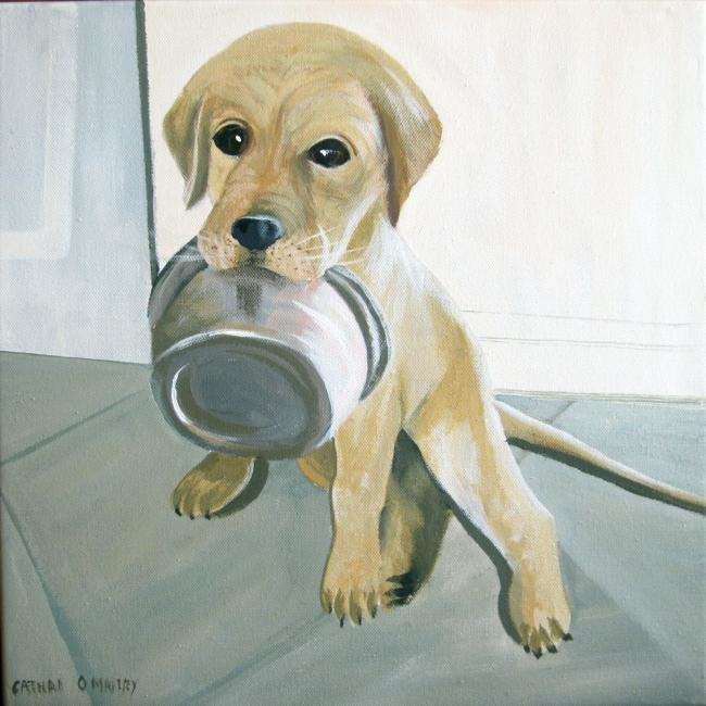 Cathal O Malley - hungry lab pup