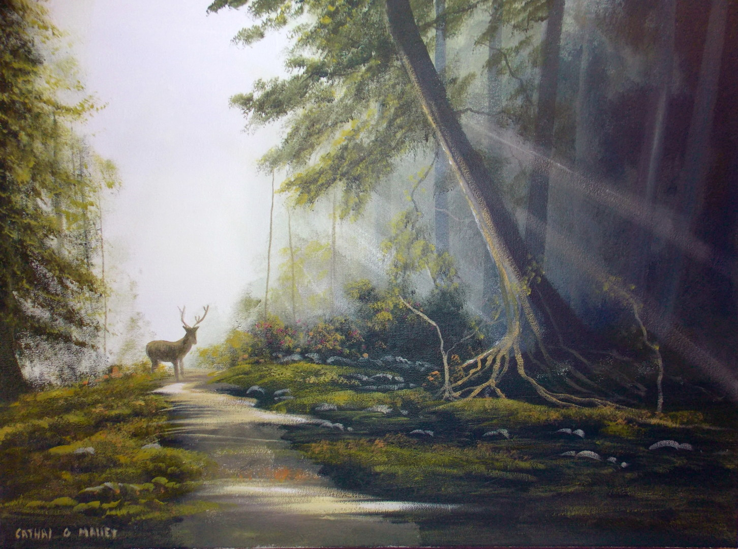 Cathal O Malley - forest light sept