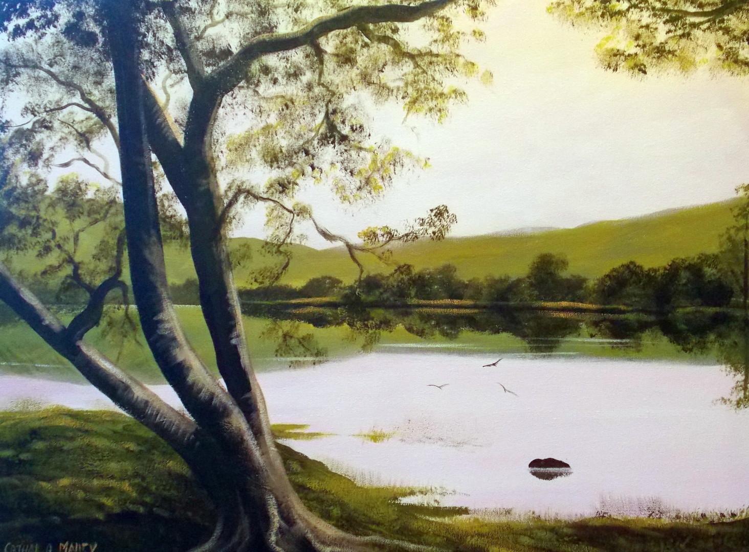 Cathal O Malley - kylemore trees