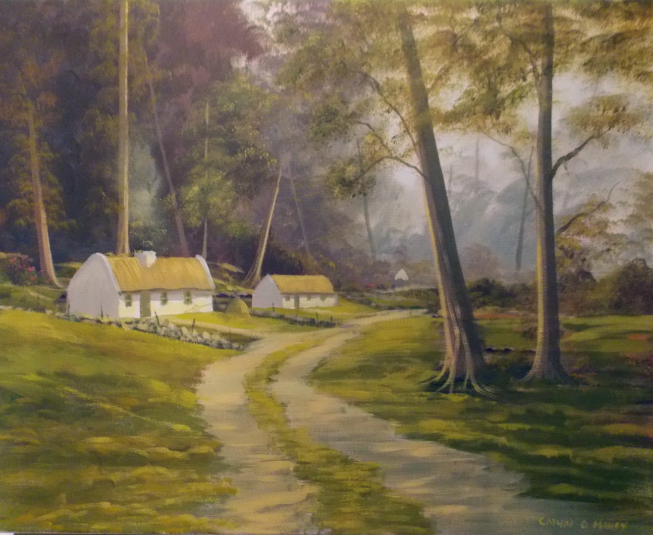 Cathal O Malley - forest cottages