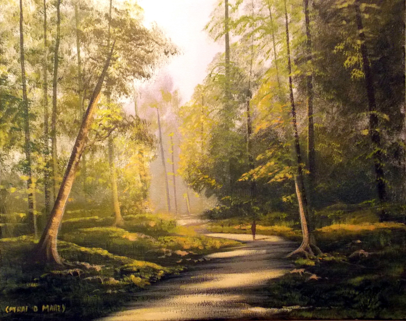 Cathal O Malley - forest  light nov