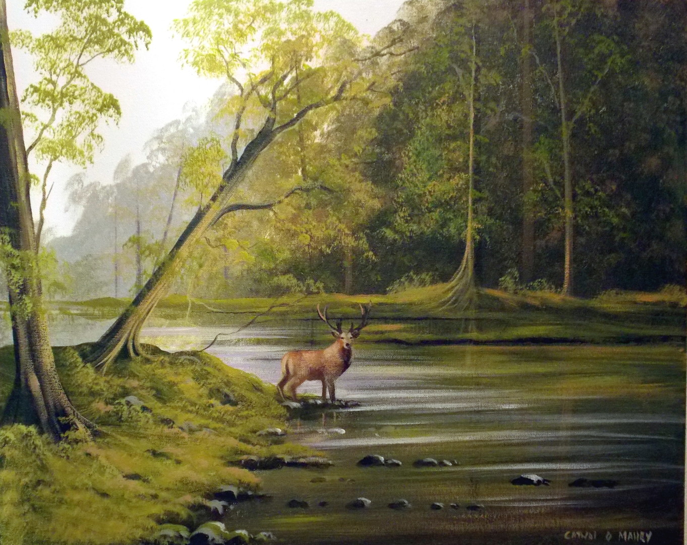Cathal O Malley - the lone stag