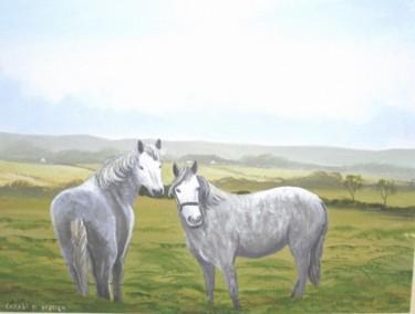 sligo ponies